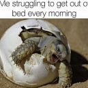 Me getting out of bed every morning