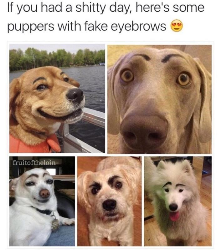 Puppies with eyebrows