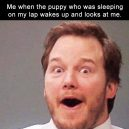 Me and puppies