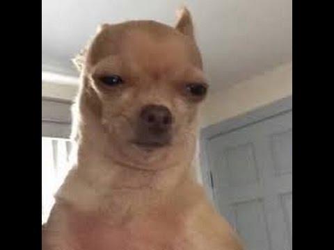 Amaze Doggo Memes