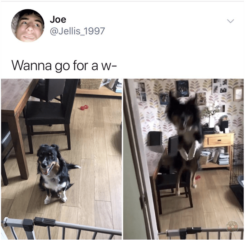 Asking my dog for a walk