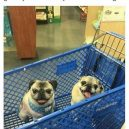 At the grocery store