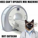 Catscan Meme