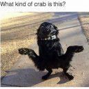 Dog or crab