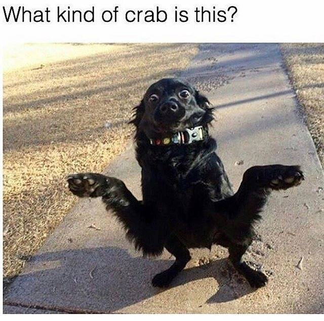 Dog or crab