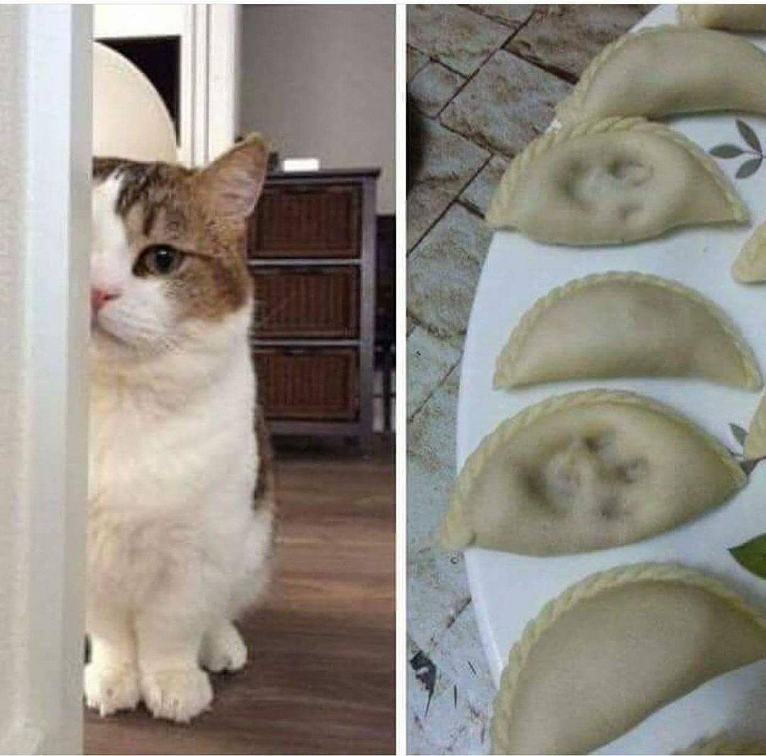 Cat ARE evil