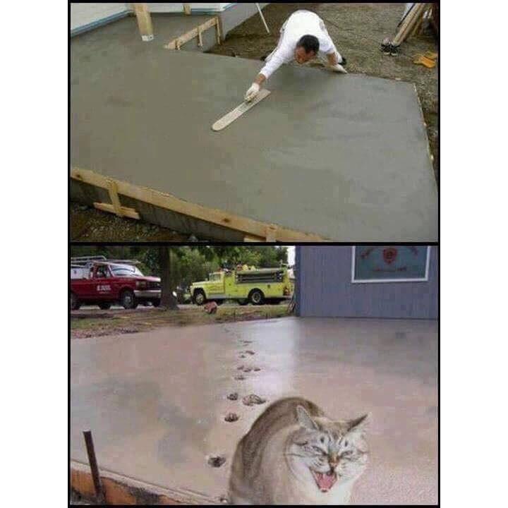 Cat goals