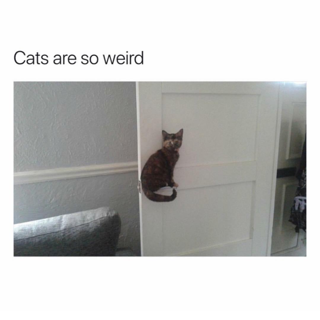 Cats are wierd
