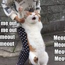 How cat develop 'meow'