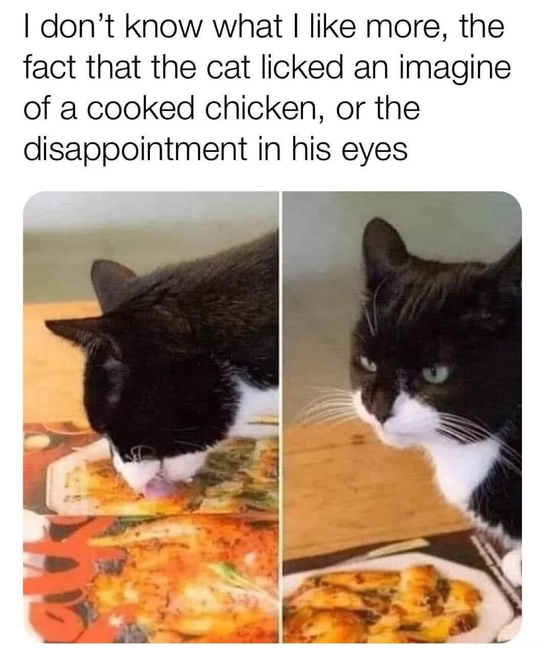 The disappointment is the cats eyes